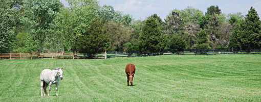 SonBob Farm turnout field